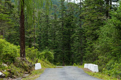 Road in the forest, paro, bhutan Royalty Free Stock Photography