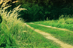 Road in a forest. The road passes through the meadow into the forest Stock Photo