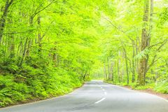 Road through the forest Royalty Free Stock Image