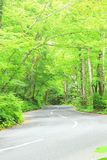 Road through the forest Stock Photography