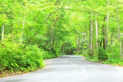 Road through the forest Royalty Free Stock Photos