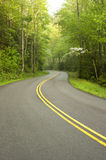 Road through forest. Stock Images