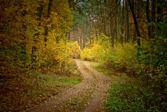 Road in a forest Stock Photos