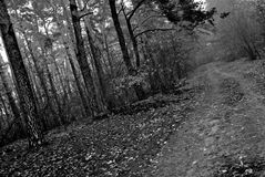 Road in a forest Stock Photography