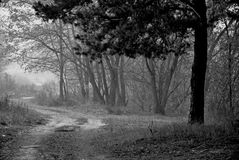 Road in a forest Royalty Free Stock Photos