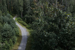 Road in forest. Photo with the image of road in forest Royalty Free Stock Photography