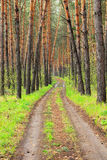 The road in the forest Stock Image
