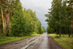 Road in forest after rain Stock Photo
