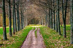 Road in forest. Forest road that ran through the green trees Stock Image