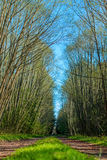 Road in forest. Forest road that ran through the green trees Stock Images