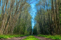 Road in forest. Forest road that ran through the green trees Stock Photography