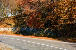 Road through the forest with red foliage. Beautiful autumn weather Stock Image