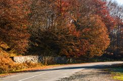 Road through the forest with red foliage. Beautiful autumn weather Royalty Free Stock Images