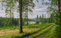Road through forest, Renko, Finland Stock Photo