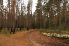 Road in the forest Stock Photography