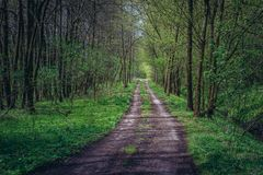 Road in forest. Near Dubnany, small town in Moravia region, Czech Republic Royalty Free Stock Photography