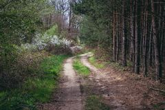 Road in forest. Near Dubnany, small town in Moravia region, Czech Republic stock photography