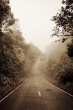 Road through the forest - Road with smog Stock Photos