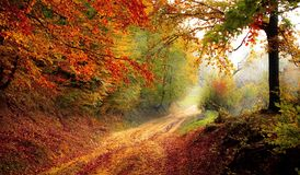 Road, Forest, Season, Autumn, Fall Stock Images