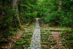 Road in a forest. Somewhere in Japan with Road in a forest Royalty Free Stock Image