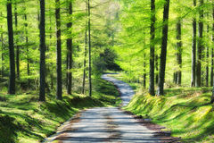 Road in the forest at spring Royalty Free Stock Photo