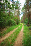 The road through the forest. Stock Image