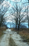 Road, forest, spring, tree, trail, blue sky Stock Images
