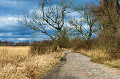 Road, forest, spring, tree, trail, blue sky Royalty Free Stock Image
