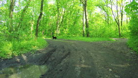 Road in forest spring stock footage