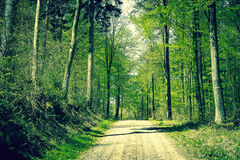 Road in the forest at springtime Stock Photography