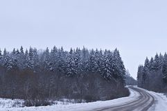 The road through forest Royalty Free Stock Photos