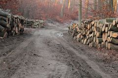 Road in forest with stacks of wood Royalty Free Stock Images