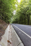Road and Forest Royalty Free Stock Photo
