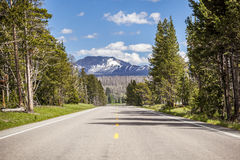 Road through forest, straight to the mountains. Stock Photography