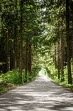 Road through a Forest Royalty Free Stock Image