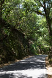 road in forest on summer day Stock Images