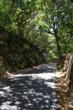 Road in forest in summer day Stock Photo