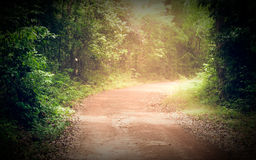 Road through forest in summer stock photography