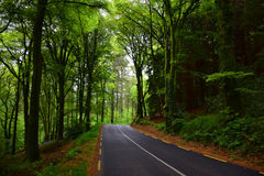 Road through the forest. Road through the summer forest in low light. Europe Stock Images