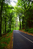 Road through the forest. Road through the summer forest in low light. Europe Royalty Free Stock Image