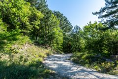 Road in the forest in summer royalty free stock photo