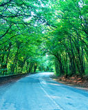 Road in forest Stock Photos