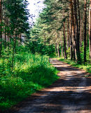 Road in the forest,  sun rays penetrate through the trees beautiful landscape Royalty Free Stock Photo