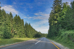 Road in forest. On a sunny afternoon Stock Images