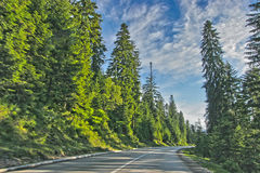 Road in forest. On a sunny afternoon Stock Photos