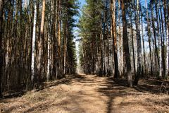 The road in the forest royalty free stock photography