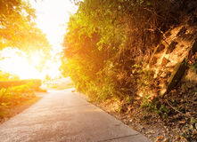 Road in forest at sunset Royalty Free Stock Images