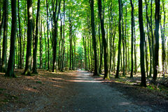 The road in a forest in sunshine Royalty Free Stock Photography