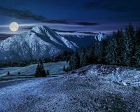 Road through forest to high mountains at night. Road through spruce forest to mountains with high rocky peak at night in full moon light Royalty Free Stock Photo