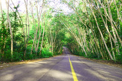Road forest. Road tree tunnel, in Thailand Stock Images
